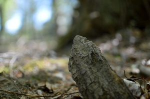 Bacton Woods3