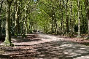 Bacton Woods4