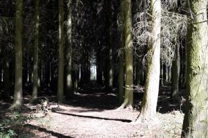 Bacton Woods6